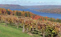 Keuka Lake, located in the heart of the Finger Lake's Wine Trail, Upstate NY Finger Lakes Wineries, Beautiful World, Beautiful Places, Travel Around The World, Around The Worlds, Mother Daughter Trip, New York Travel, Wine Country, Great Places