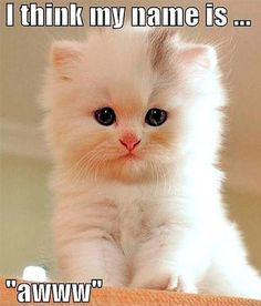 I love cats so much! So, sharing some awesome and so cute cats and kittens! Cute Kittens, Kittens And Puppies, Fluffy Kittens, Fluffy Cat, Ragdoll Kittens, Tabby Cats, Bengal Cats, Small Kittens, Little Kittens