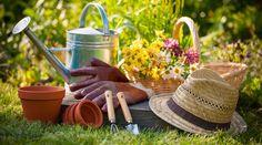 Top 10 ideas for the garden!