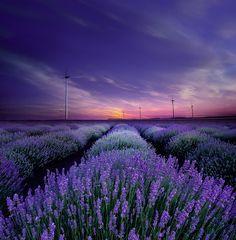Photo With the scent of lavender par Albena Markova on 500px