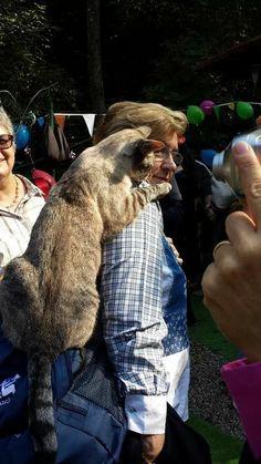 Ruben, lo show cat  dell'Oasi dei mici felici.... spettacoloso!!