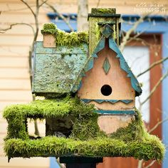 Moss covered bird house. Someday when I have a house and yard, I'm going to have lots and lots of bird houses!