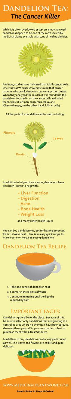 Dandelion Tea The Cancer Killer Infographic