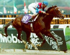 The great Cigar, who won a mind boggling 16-race straight races from 1994 to 1996 (including Dubai World Cup and Breeders' Cup Classic), died at age 24 at Rood and Riddle Equine Hospital in Lexington. 1990-2014.