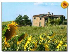 Casa dei Girasoli - Agriturismo in Toscana (Siena) San Gimignano