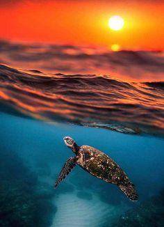 "j-k-i-ng: ""Untitled by: one_santi"" Sea Turtle Wallpaper, Ocean Wallpaper, Animal Wallpaper, Sea Turtle Pictures, Cute Animal Pictures, Cute Backgrounds, Cute Wallpapers, Cute Baby Turtles, Underwater Animals"
