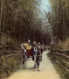 Bamboo Avenue - Kyoto | by Okinawa Soba (Rob)
