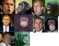 (More Democrat DISRESPECT for President George Bush.) Funny George Bush Pictures: Bush or Chimp?