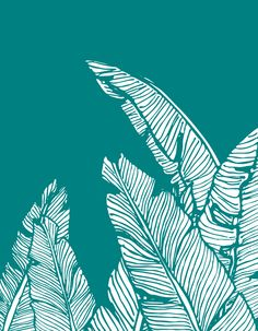 Hand-drawn banana leaves, turn into a vector illustration on teal blue background. From ink pen hand drawing by DesigndN.