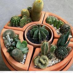 We all love succulents and cactus but do you know the difference between them? Click the post to learn on our website! Succulent Arrangements, Cacti And Succulents, Planting Succulents, Cactus Plants, Mini Cactus Garden, Cactus Flower, House Plants Decor, Cactus Decor, How To Grow Cactus