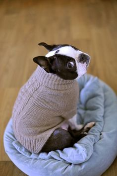 Is This Sweater Necessary?! ❤❤❤ from: http://bostonterrierworld.com/is-this-sweater-necessary/