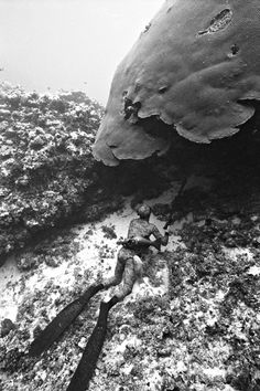 Incredible Black and White Underwater Photography - My Modern Metropolis