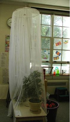 let the children play: reggio-inspired learning environments part 3* indoor butterfly house