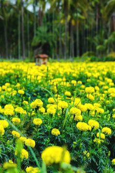 Campo de flores / Yoosaf Abdulla