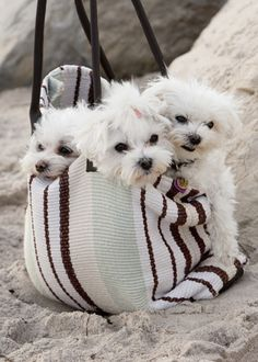 Three babies at the beach <3<3<3  ...hahaaa, the one pup on the right is all growly! rotfl...