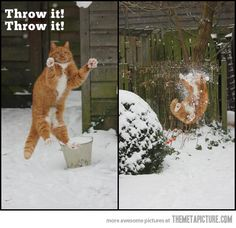 funny-cat-jumping-snow