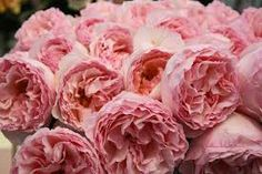 Garden Roses - LOVE these and they are an inexpensive alternative to Peonies.