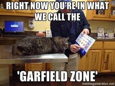 """40-70% of pets are obese, which worsens their lifespan! Save your cat's life and avoid """"Garfield"""" Zone!"""