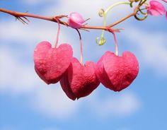 Quebra das Paredes do Coração - Cura da Alma: Quer ser feliz?