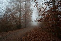 alternative, autumn, colours, forest, grunge