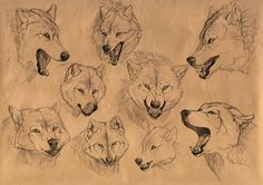I always liked to do pencil sketches. I have drawn different expressions of the wolf muzzle. Wolves basically use body language. Expression of a muzzle and body movement can tell about mood and int...