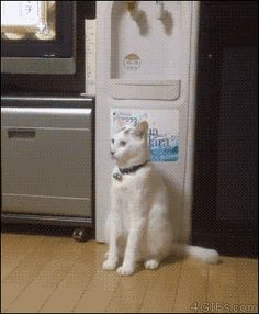 Funny gifs Think this cat might be broken...