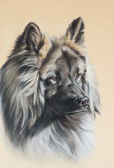 * Bosse * Eurasier Breed / Auftragsarbeit - commissioned work / Soft Pastel