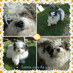 My Sammie enjoying the sun of spring 2013