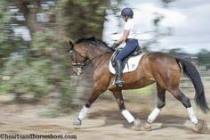 dressage. horses. love. holsteiner. horse photography.