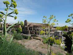 Rome, coliseu