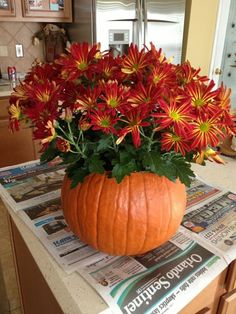 Make these DIY pumpkin flower arrangements to add a pretty touch to your Thanksgiving table or your fall décor! Get the tutorial at The Sweetest Occasion. Thanksgiving Decorations, Seasonal Decor, Halloween Decorations, Outdoor Decorations, Thanksgiving Table, Table Decorations, Pumpkin Flower, Pumpkin Vine, Diy Pumpkin