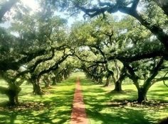 Oak Alley Vacherie, Louisiana