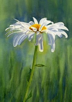 Sharon Freeman's Pacific Northwest Watercolors Sweet single daisy watercolor painting. Shasta Daisy Flower With Blue Green Background by Sharon Freeman - Shasta Daisy Flower With Blue Green Background Painting - Shasta Daisy Flower With Blue Green Back Watercolor Landscape, Watercolor Flowers, Landscape Paintings, Watercolor Paintings, Watercolor Paper, Watercolours, Simple Watercolor, Drawing Flowers, Daisy Drawing