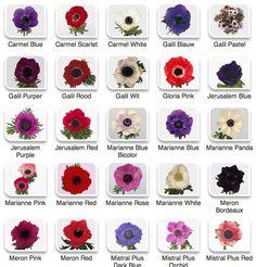 anemones chart