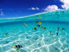 underwater-world-live-1920x1200-wallpaper-vida-marina-en-el-fondo