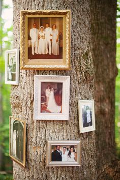 pictures on a tree - doin it!