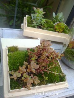 cassette di legno con le piante grasse