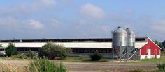 hog-barn-red-2-575x255.jpg (575×255)
