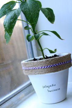 Indoor Gardening Tips For A Better Yield Dream Garden, Garden Art, Garden Plants, Indoor Plants, Container Gardening, Gardening Tips, Indoor Gardening, My Secret Garden, Planting Flowers