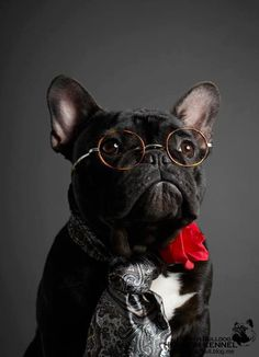 """Yes, did someone want to see the bank president?"" #dogs #pets #FrenchBulldogs facebook.com/sodoggonefunny"