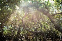 Haunted San Marcos Elfin Forest