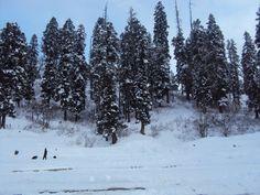 Gulmarg, India   #kashmir #india #travel #snow #winter #wanderlust #explore