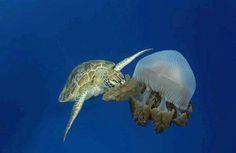 fundo do mar real tartaruga - Pesquisa Google