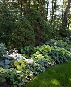 Unlike some perennials that require a bit of coaxing to draw out their best hues, hostas offer a wide range of color with little effort. Landscape Design, Garden Design, Woodland Garden, Garden Borders, Side Borders, Garden Cottage, Shade Plants, Garden Spaces, Front Yard Landscaping