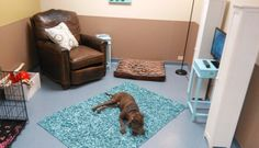 Shelter builds special room to give lonely Dogs a taste of home! For animal people. Pass it on.