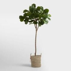 One of my favorite faux fiddle leaf trees! Cost Plus World Market 6 Foot Faux Fiddle Leaf Fig Tree