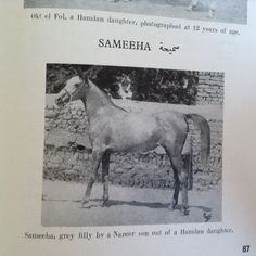 Sameeha, by a Nazeer son out of a Hamdan daughter