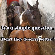 They deserve better  @animalsabove• • • • • • • • • • • • • • • • #whatveganseat #vegan #veganmemes #veg #meatfree #veganuniverse #veganlifestyle #dairyfree #govegan #meatfreeathlete #veganfoodshare #crueltyfree #vegangirl #rawvegan #veganlife #vegansofinstagram #animalrights #vegansofig #veganrecipes #plantbased #vegangirl #rawtill4 #rawtillwhenever #vegano #vegan #veganism #vegansofig #plantbased #veganbodybuilding #animalcruelty