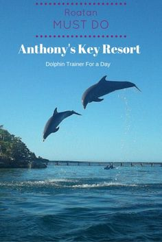 Roatan Honduras Anthony's Key Resort Dolphin trainer for a day