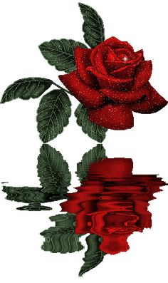 Beautiful Red Rose And Water Glitter Graphics Beautiful Red Roses, Beautiful Gif, Flowers Gif, Love Flowers, Night Flowers, Halloween Imagem, Gif Bonito, Glitter Roses, Animation